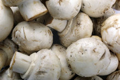 Mushrooms as background. Royalty Free Stock Images