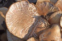 The mushrooms Royalty Free Stock Image