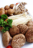 Mushrooms assorted platter Royalty Free Stock Image