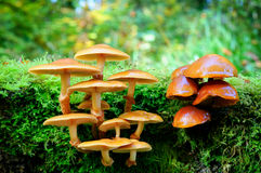 Mushrooms in autumn forest Stock Images