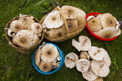Mushrooms in autumn Stock Image