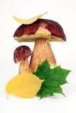 Mushrooms with autumn leaves. On a white background Royalty Free Stock Images