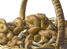 Mushrooms in a basket Stock Photos