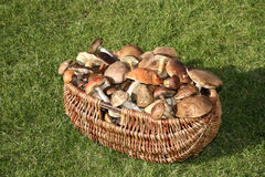 Mushrooms basket Stock Photos