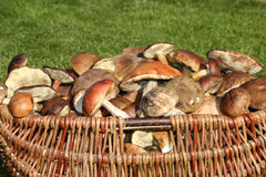 Mushrooms Basket Royalty Free Stock Photo