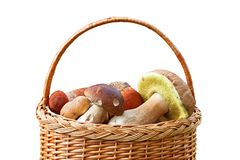 Mushrooms in a basket. Stock Photo