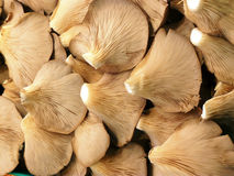 Mushrooms basket stock images