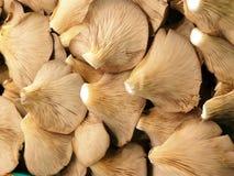 Mushrooms basket Stock Images