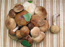 Mushrooms in a basket. On a striped rug Stock Photos