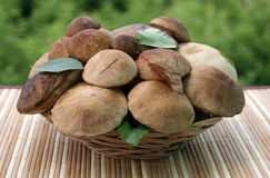 Mushrooms in a basket. On a striped rug Royalty Free Stock Images