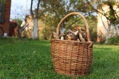 Mushrooms in the basket Stock Photos
