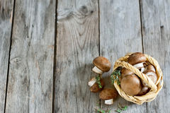Mushrooms in basket background Stock Image