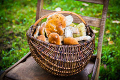 Mushrooms in a basket Royalty Free Stock Photo