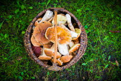 Mushrooms in a basket Stock Images
