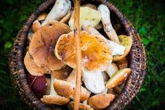 Mushrooms in a basket closeup Stock Image