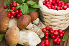 mushrooms and a basket of cranberries, close up Royalty Free Stock Photo