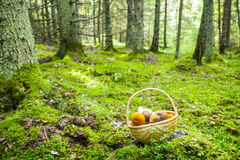 Mushrooms basket in forest Stock Photos