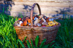 Mushrooms in the basket. Forest mushrooms. Royalty Free Stock Photography