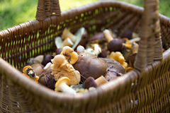 Mushrooms in the basket Royalty Free Stock Photography