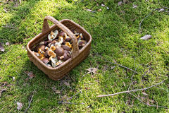 Mushrooms in the basket Royalty Free Stock Images