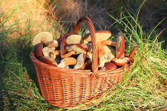 Mushrooms in basket Royalty Free Stock Images