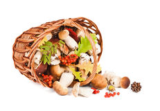 Mushrooms in basket Royalty Free Stock Photography