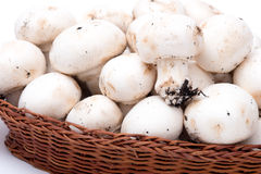 Mushrooms in a basket isolated on white Royalty Free Stock Images