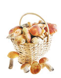 Mushrooms in a basket over white background Royalty Free Stock Photo