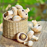 Mushrooms in basket Stock Photo