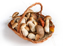 Mushrooms in basket. Studio photography of gustable edulis - on white background Royalty Free Stock Photo