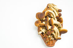 Mushrooms basket up above Stock Images