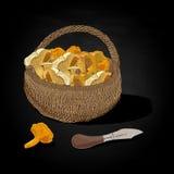Mushrooms in the basket. Vector illustration. Stock Photo