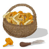 Mushrooms in the basket. Vector illustration. Stock Photography