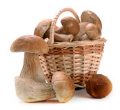 Mushrooms in a basket Stock Photo