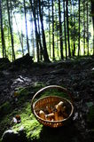Mushrooms basket in the woods Royalty Free Stock Photos