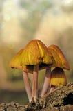 Mushrooms. Beautiful mushrooms in my backyard Stock Image
