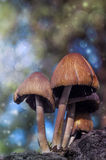 Mushrooms. Beautiful mushrooms in my backyard Royalty Free Stock Photos