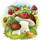 Mushrooms and berries. Vector drawing. Forest harvest of mushrooms, strawberries and cranberries Stock Image