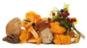 Mushrooms, Berries, Pine Cones, Strawberries And Stock Photos
