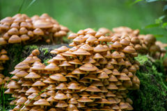 Mushrooms. Big family of wild mushrooms Stock Photo