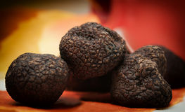Mushrooms black truffle on a red-yellow blurred background Stock Images
