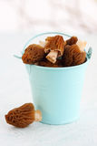 Mushrooms in a blue bucket Royalty Free Stock Photos