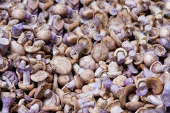 Mushrooms with blue stem. Blue stem mushrooms from a market stand Stock Photo