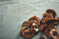 Mushrooms on a blue and white checkered tablecloth Royalty Free Stock Photo