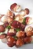Mushrooms Boletus. Boletus mushrooms on white background Royalty Free Stock Images