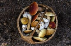 Mushrooms boletus in the basket on on top