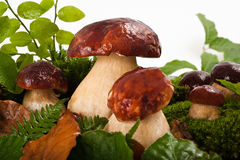Mushrooms(boletus edulis) Royalty Free Stock Photo