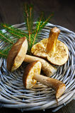 Mushrooms boletus edulis in a basket Royalty Free Stock Image