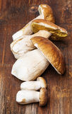 Mushrooms - Boletus edulis Stock Photos