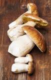 Mushrooms - Boletus edulis Stock Photos